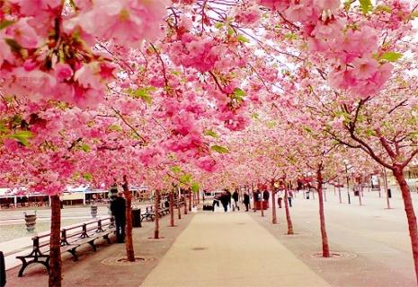 Отдых в Японии: Групповой тур «Цветение сакуры» 10 дней Стоимость 2 350 USD