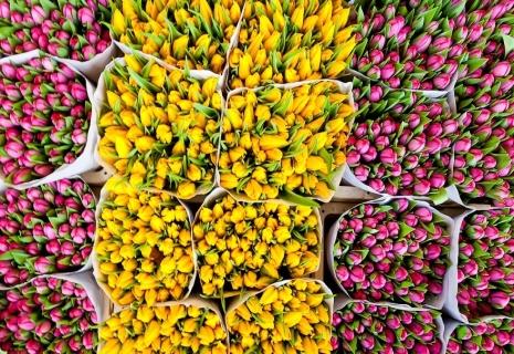 Цветочный карнавал в Амстердаме
