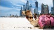 Отдых в ОАЭ | Тур в ОАЭ + Виза + 3 экскурсии в подарок! 7 ночей от 682 USD