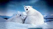 Круиз Арктика 2015. Экспедиция на Судне класса люкс «Sea Spirit»14 дней от 6 490 $